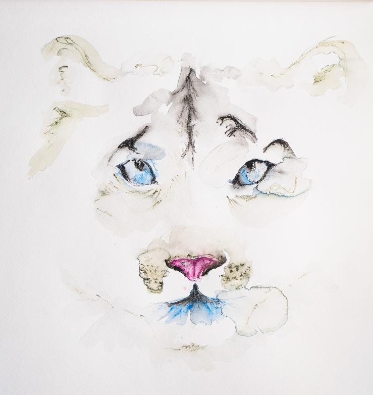 snowcat-face