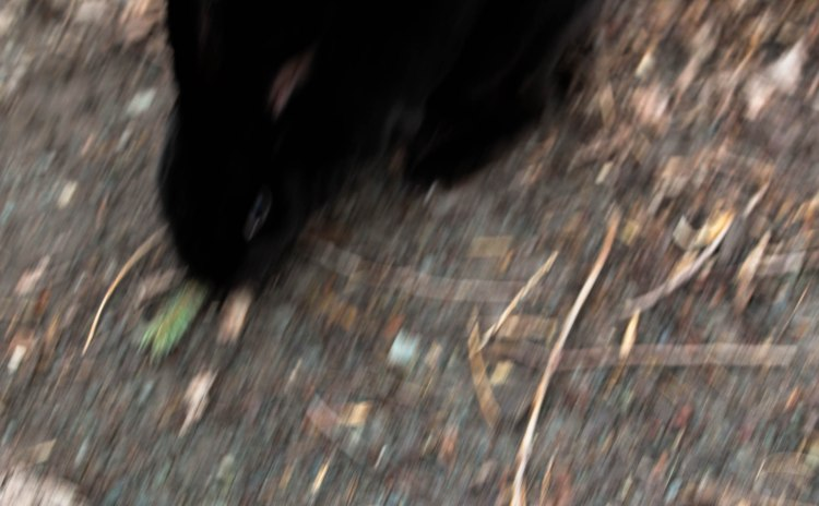 blurry bunny