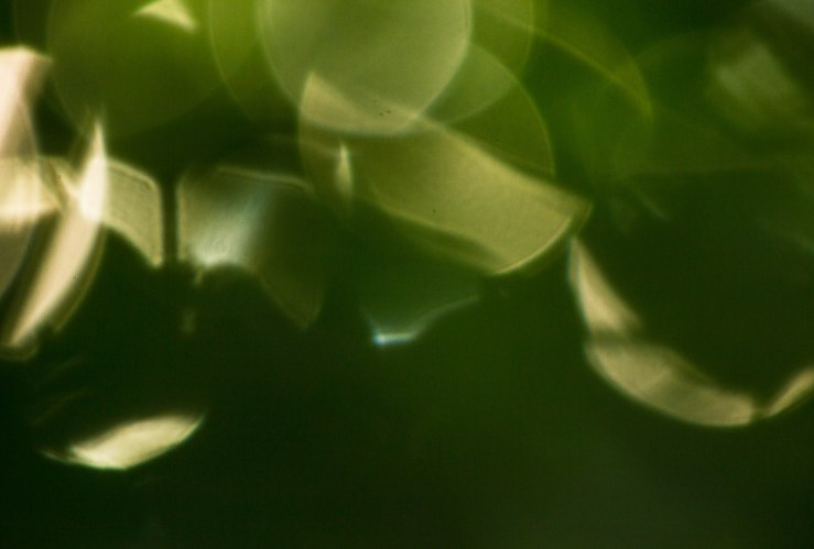 sun spots within leaves 2