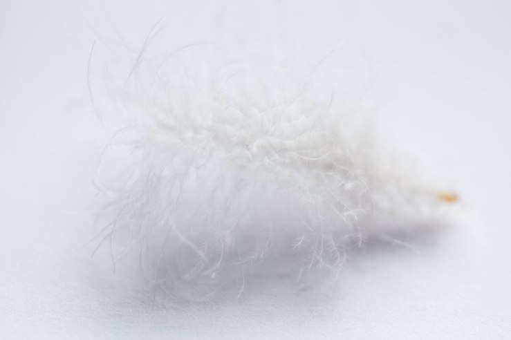white on white feather 2