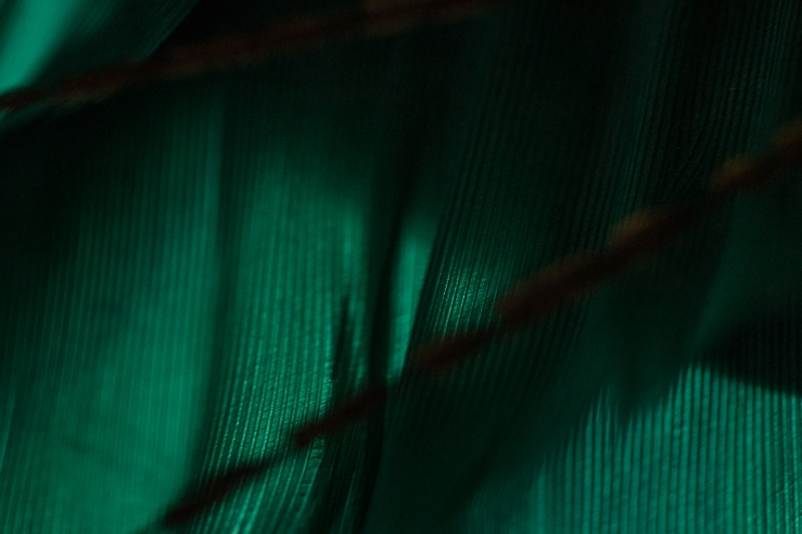 green green feather