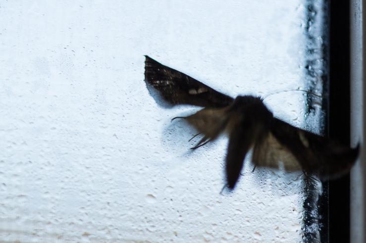 moth at window