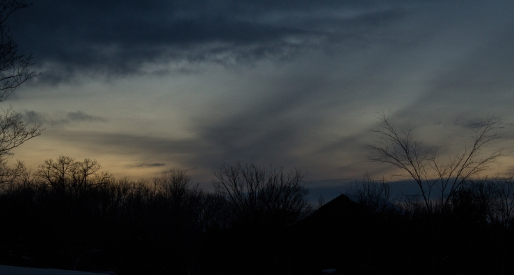 screech owl sunset