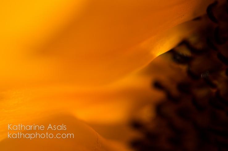 sunflower ecu abstract