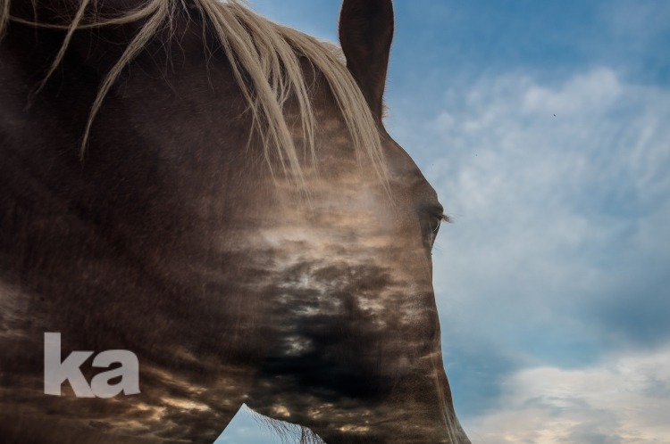double expose horse sky