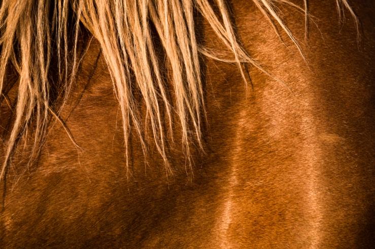horse flank hair