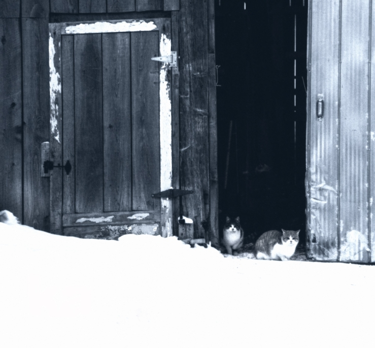 cats in barn door colorfx