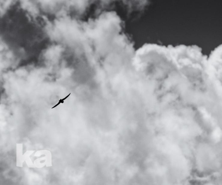 square b&w silhouette bird left slvrfx