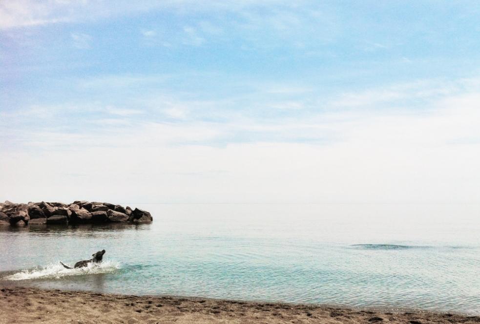 dog at beach, iphone