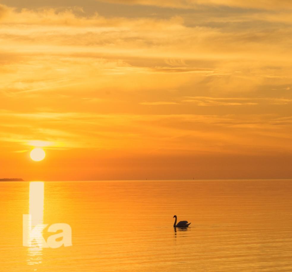 orange sunrise swan square