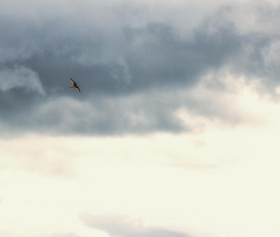 square single sharp bird dreamy clouds clrfx EXP1