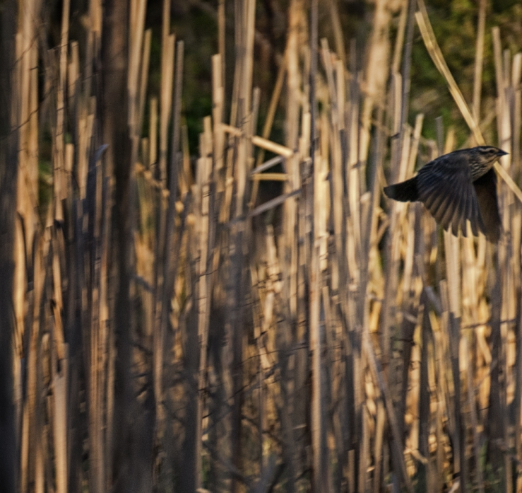 bird leaving rushes new