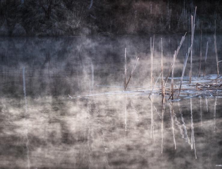 mist on pond