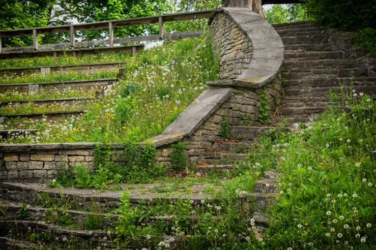 curve of stairs, dandelions
