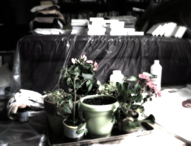 plants on tray, smear