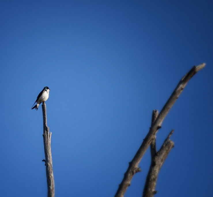 tiny bird atop old tree