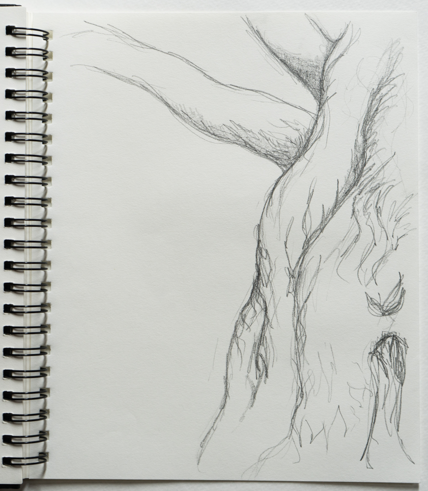 tree branch drawing