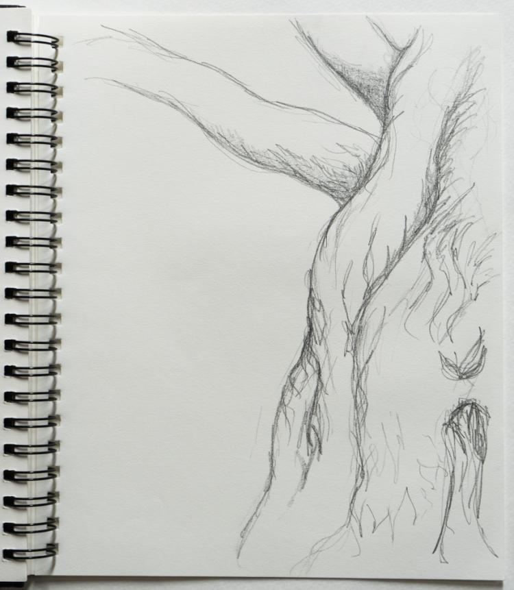 tree branch drawing