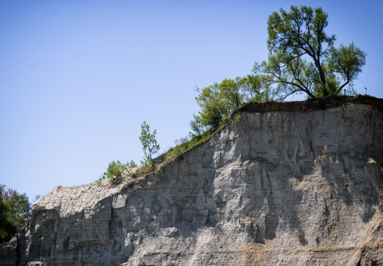 tree leaning down cliff side