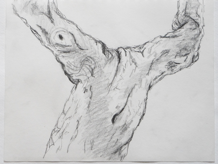 tree torso drawing
