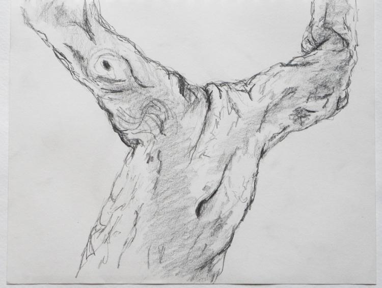 tree torso drawing