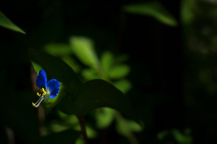 tiny blue flower