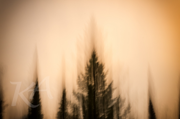 tree blur orange sky 1