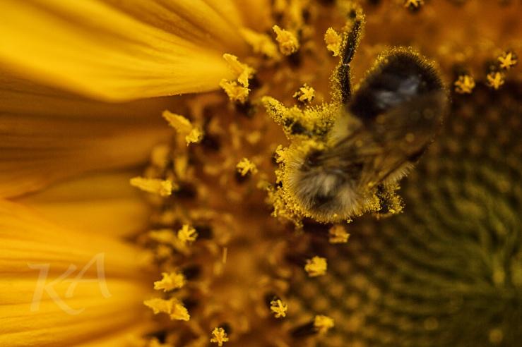 overhead of bee
