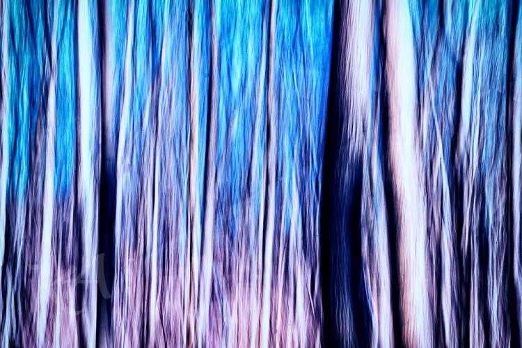 blue purple trees
