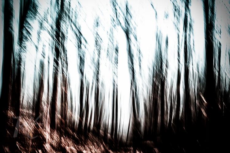 spooky tree path