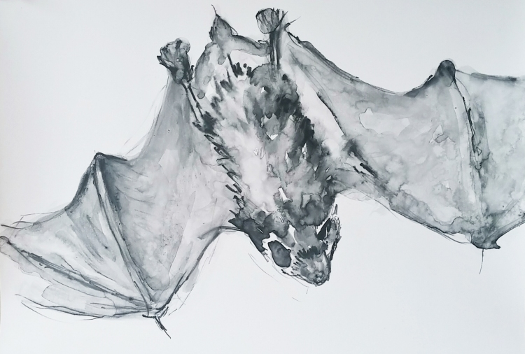 bat fly down