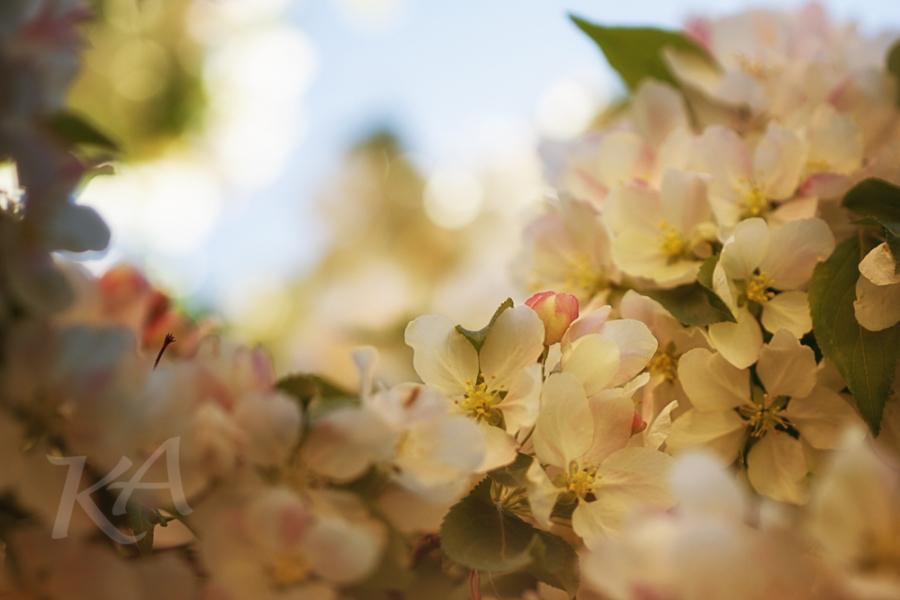 Jubilant Blooms
