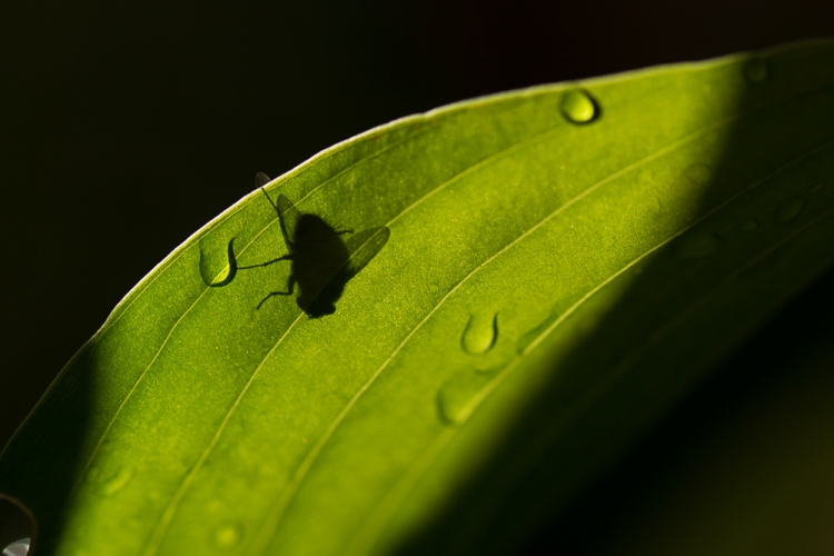 fly and raindrops