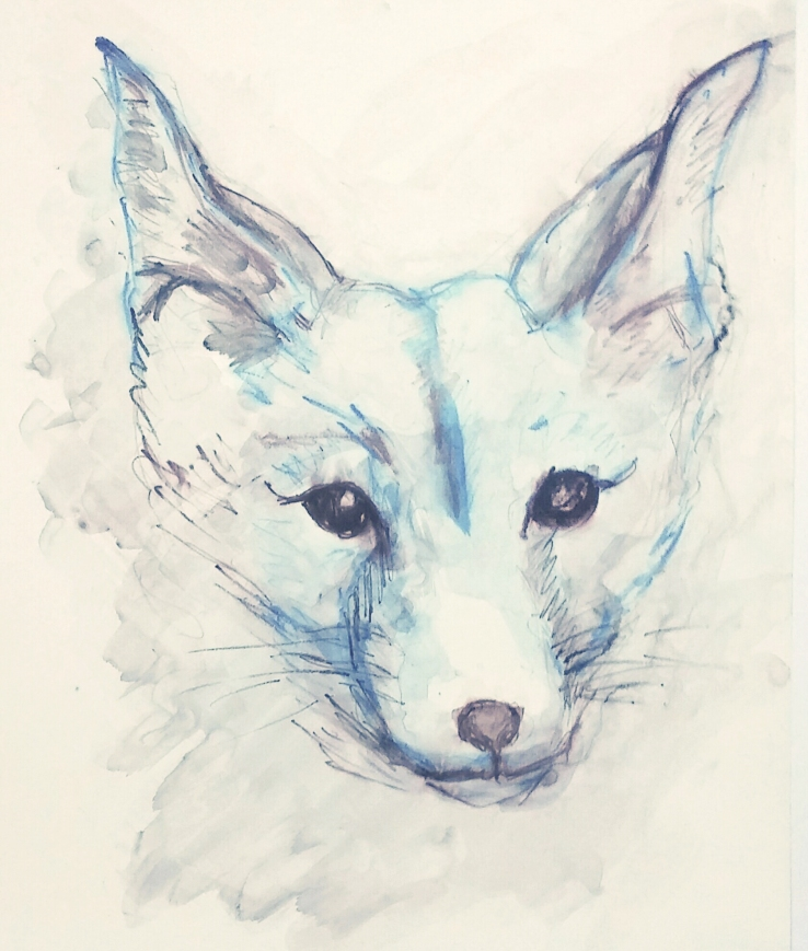 fox drawing bluish