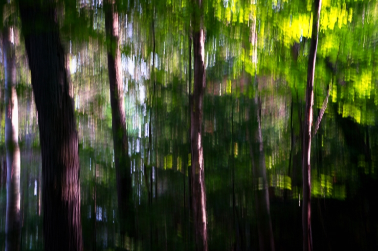 trees blur