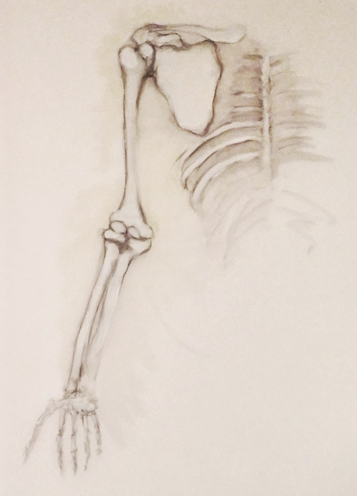skeletal-arm