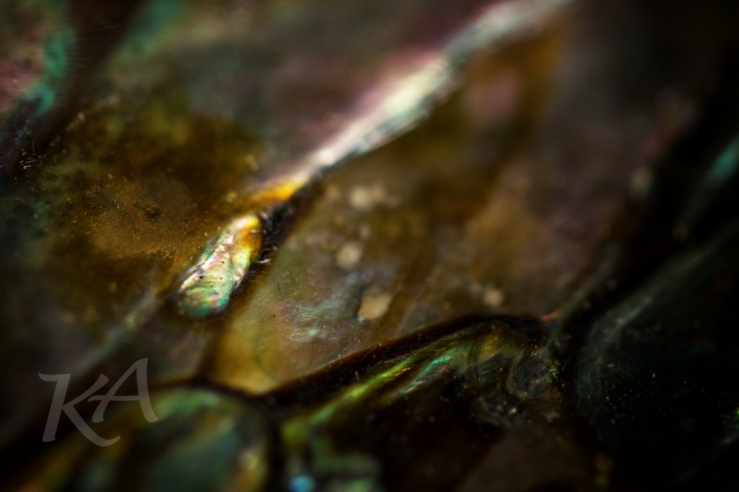 abalone-rivulet